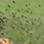 Fogyatkozó Nap – fogyatkozó méhek