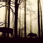 Az emlősök napi ritmusát is megzavarta az ember