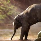 Évmilliók alatt állhat helyre a most kihaló emlősök helyén tátongó űr