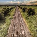 Vasútvonalak mentén és vadetetők közelében is átalakul a növényvilág