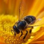 Méhlegelő és rovarhotel a beporzók védelmére
