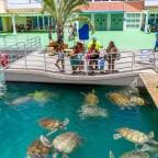 Bizonytalan teknősjövő