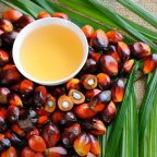 Ezért keresik a magyarok a pálmaolajmentes termékeket